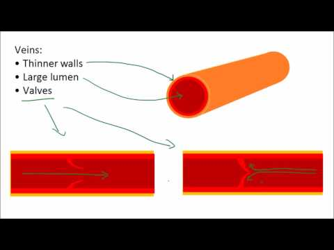 Blood & Blood Vessels | GCSE Science | Biology | Get To Know Science