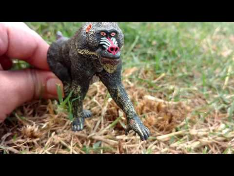 safari-jungle-zoo-animals-toys-learn-names-and-sounds-of-wild-animals-kids-z-fun