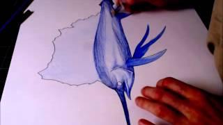 Drawing - Coloring Sailfish