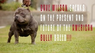 DAVE WILSON: SPEAKS ON THE CURRENT STATE AND THE FUTURE OF THE AMERICAN  BULLY BREED