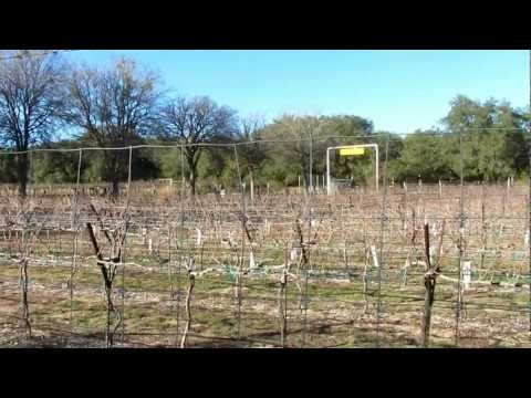 Dry Comal Creek Vineyards - New Braunfels, Texas