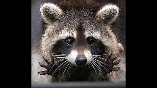 Смешные Видео Приколы с Котами. Смешные Коты до Слез. Смешные Животные 2019.