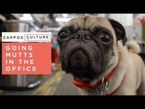 Benefits of Bringing Your Pet To Work