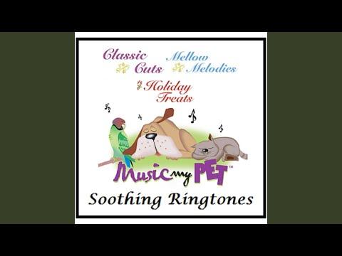Mozart: Sonata For Piano No  11-Andante Grazioso - Classical