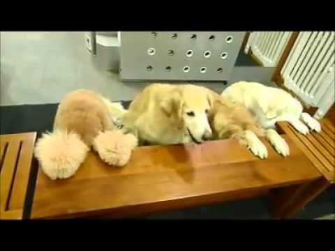 Dogs pray before eating!