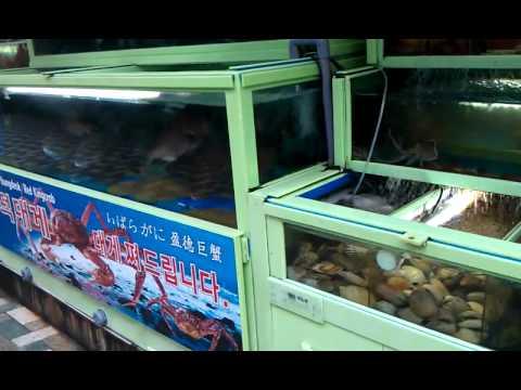 Busan farmer's market, more fresh fish!