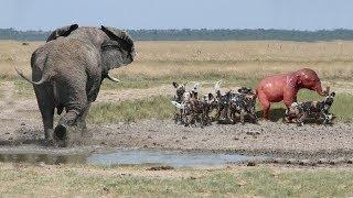 動物の狂気のような瞬間2018母象彼女の赤ちゃんを救う失敗ライオン対ク...