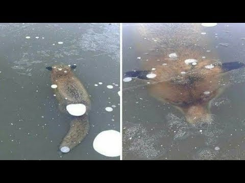 5 Animals Found Frozen In Ice