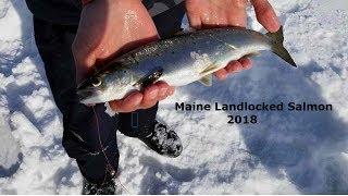 Catching Landlocked Salmon in Maine - Ice Fishing