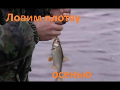 диалоги о рыбалке ловля плотвы осенью
