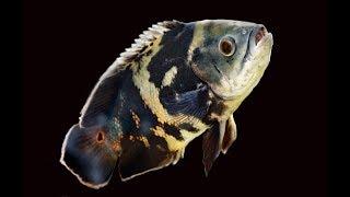 Fishroom Resolutions!