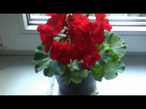 Наши комнатные растения| Цветы на подоконнике FLOWERS