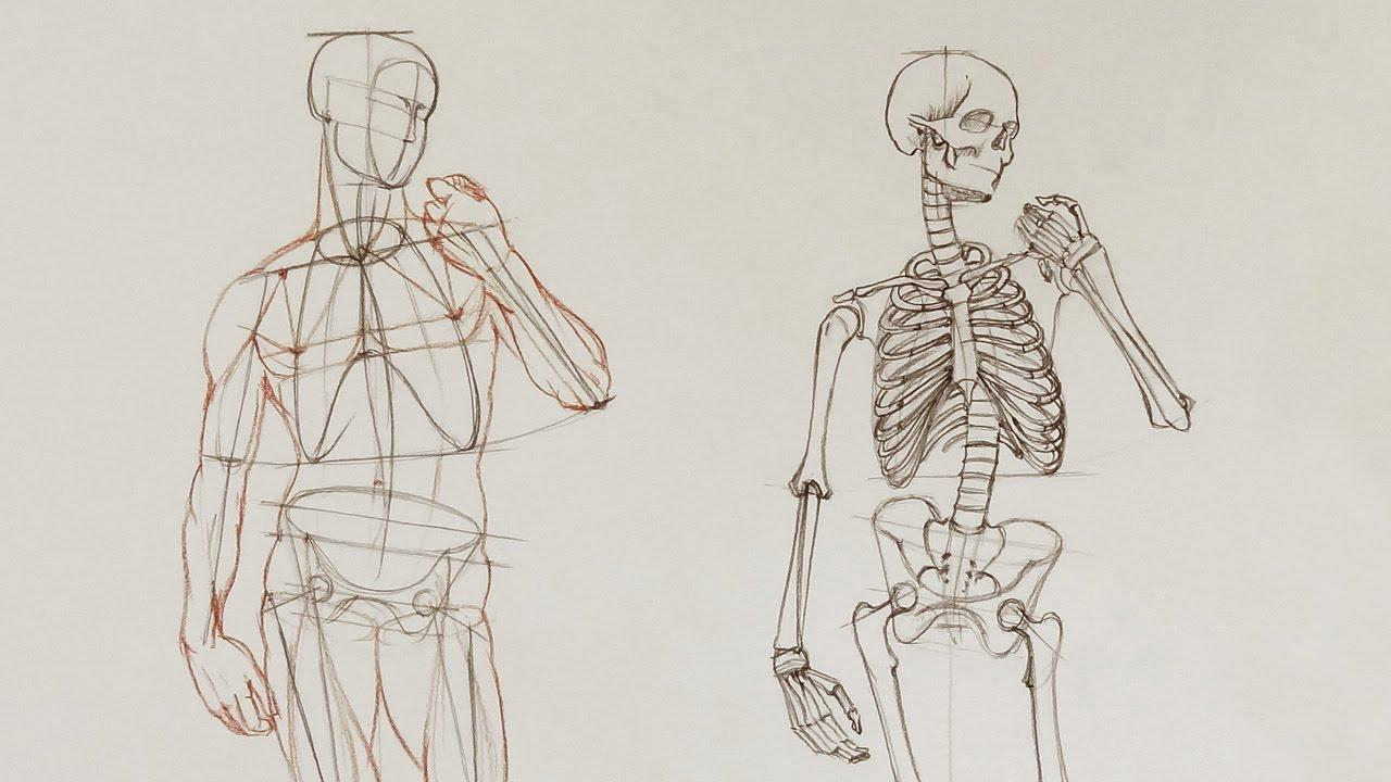 Human Body Anatomy - Anatomy Master Class - YouTube