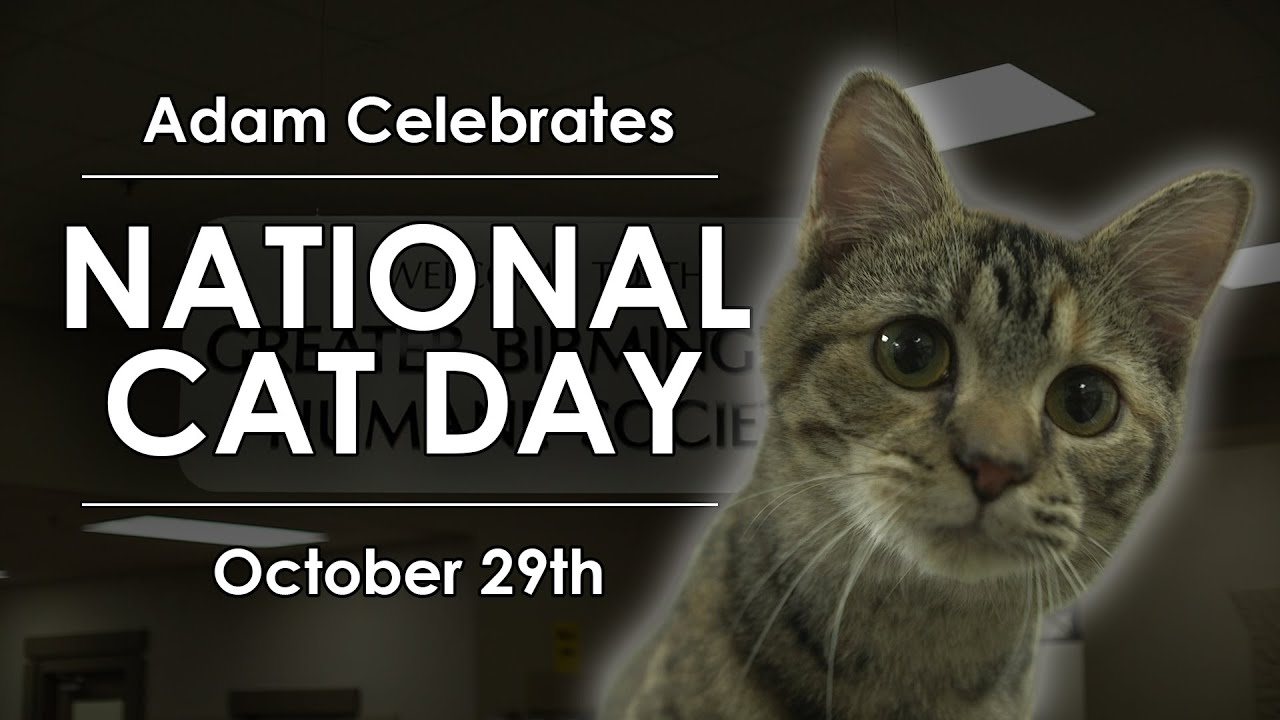 National Cat Day - Adam Celebrates - Youtube-3716