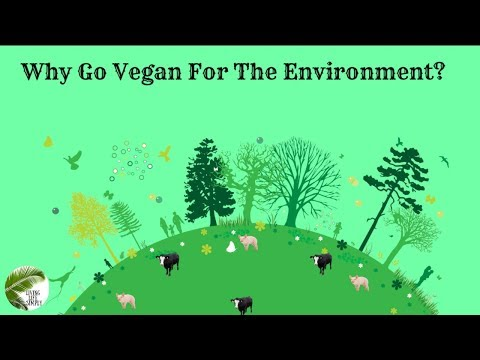 Why go vegan for the environment?