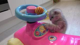 Котенок милый и забавный...