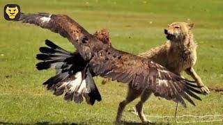10 Grandes Batallas de las Aguilas