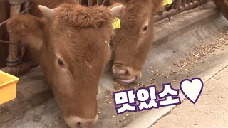 소들을 위한 특급 식사, 사료 제작 과정 / YTN 사…