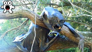 Strangest Things People Found In The Woods