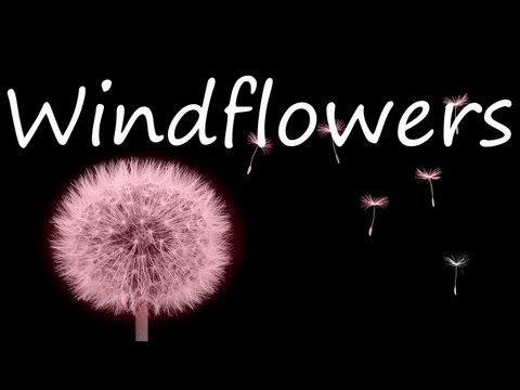 Seals & Crofts -  Windflowers (Lyrics)