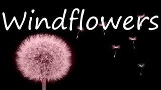 Seals & Crofts -  Windflowers (Lyrics)