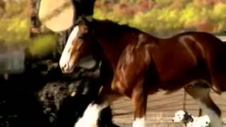 Budweiser Clydesdale Commercial Super Bowl 2008
