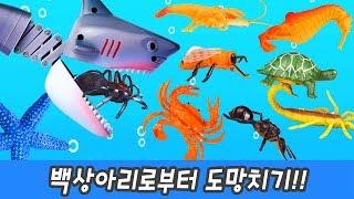한국어ㅣ백상아리로부터 도망치기!! 해양동물과 곤충 이름 외우기, 코레샵ㅣ꼬꼬스토이