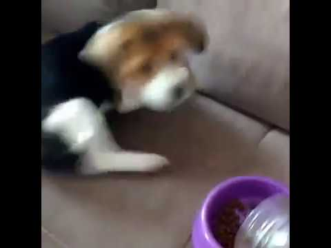 Puppy Dog Cute and Funny Reaction Video