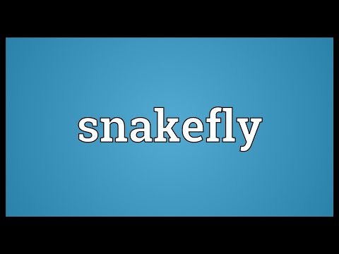 Snakefly Meaning