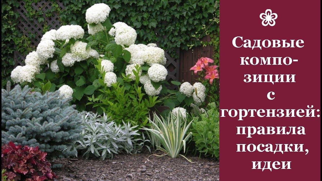 ❀ Садовые композиции с гортензиями: правила создания, идеи