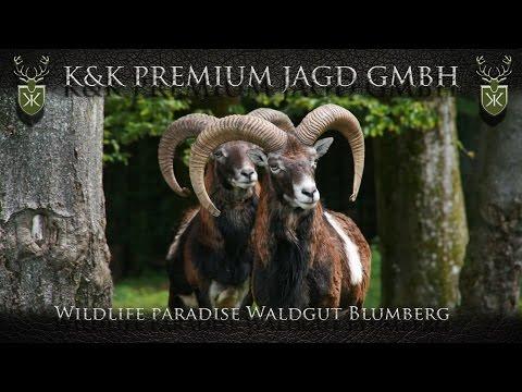 Wildlife paradise Waldgut Blumberg in Germany - K&K Premium Jagd