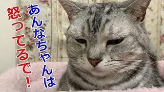 姉妹 チャンネル 猫 猫姉妹ちゃんねる Cat