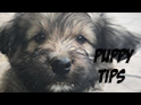 Tips For 3 Week Old Puppy