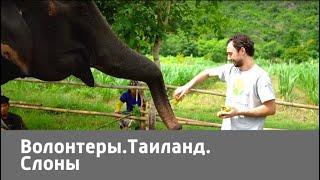 Волонтеры. Таиланд. Слоны | Живая Планета