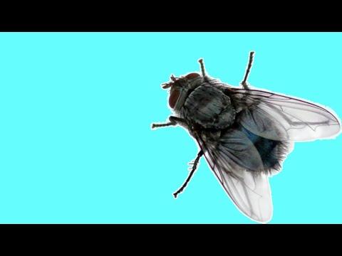 🐾 Новая игра для кошек, котов и котят! На экране наглая муха бегает и летает от вашей кошки!