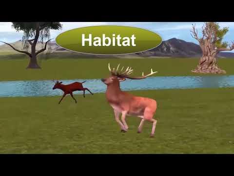 Habitat Animated Video Taleem Ghar Tele School from YouTube · Duration:  24 seconds