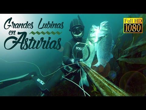 Pesca submarina, Grandes Lubinas en Asturias (a poca agua)