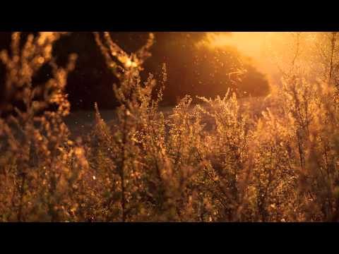 Nature Relax Sounds - Wind, Crickets, Grasshoppers, Peepers  - Natural Meditation, Relax, Yoga Music