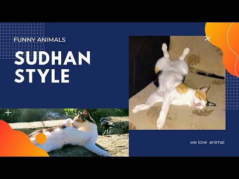 Funniest Cats 🐈 Awesome Funny Pet Animals Life Videos -Funny Animals 2020