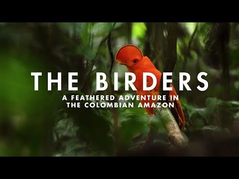 THE BIRDERS | A feathered adventure in the Colombian Amazon.