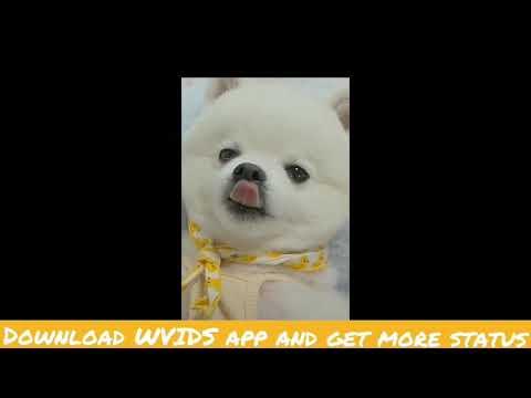 Cute Dog Good Morning Status Wvids Youtube