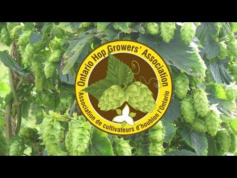 Brewers' Panel - Ontario Hop Growers' Association 2018 AGM