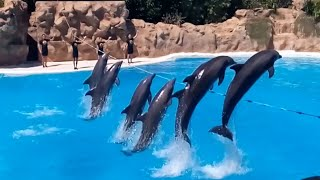 Tenerife 01 Loro Parque 02 Шоу дельфинов