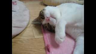 寝てばかりのわさびの動画を撮ってみました。そうしたら、寝ていると思...