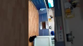 Кошка смотрит мультфильм