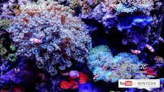Full HD 1080p 美的因 海洋生物 水世界 海底世界  熱帶魚 水族箱  (8) ky0212