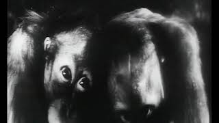 EXTRAIT | Artavazd Pelechian, «Les Habitants» (1970)
