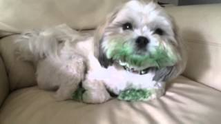 Dog Eats Green Food Coloring