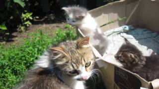 Funny cats   funny videos   funny cats   funny animals   funny dogs   funny cats