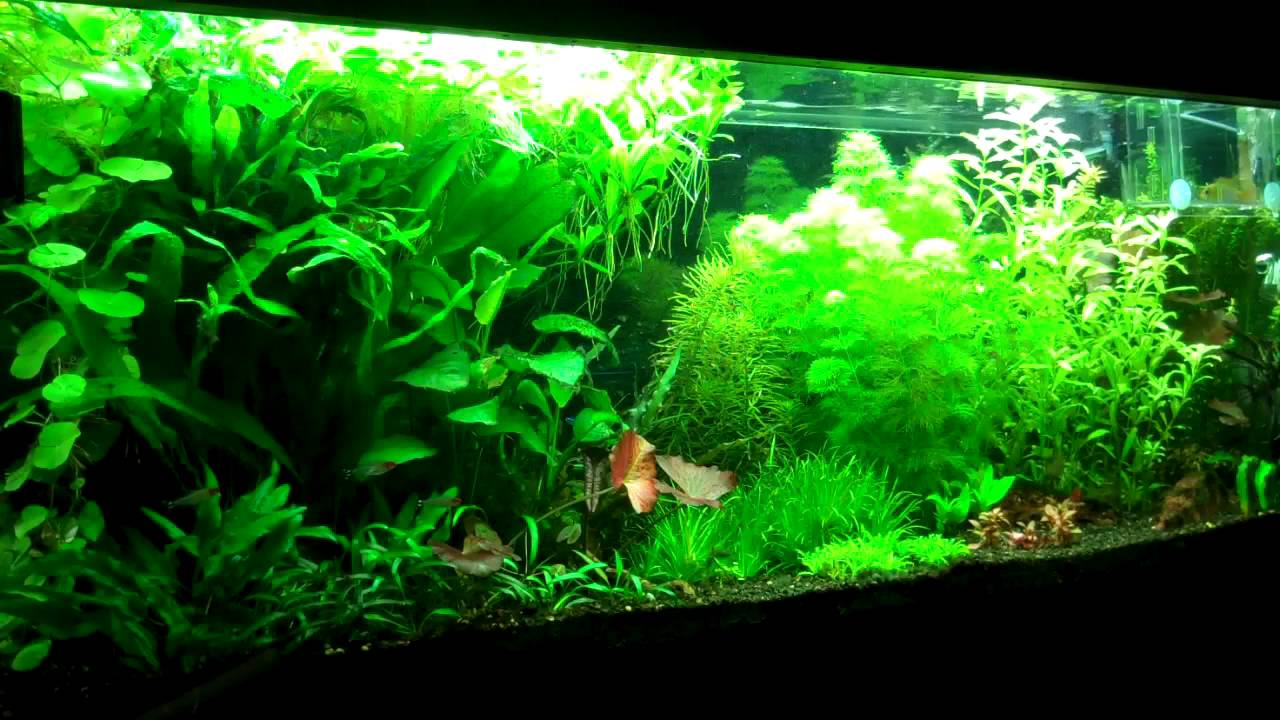 Setting up your first planted aquarium part 2 substrate for Plante aquarium